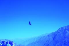 IMG_4141-BLUE